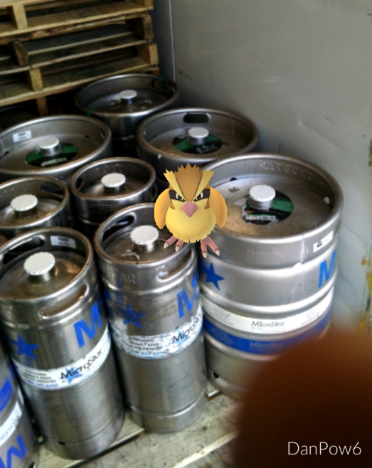 These pesky Pidgey's are everywhere!